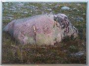 Seit v pastvinách nad Nikkaluktou, 2006 - 2007 2