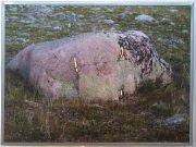 Seit v pastvinách nad Nikkaluktou